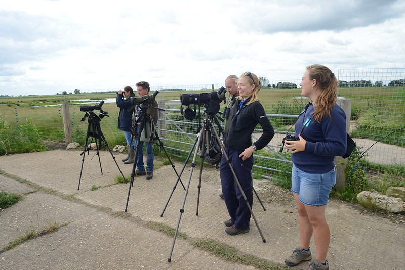 Project Godwit team watch as birds are released WWT 2017
