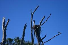 Egmont Key State Park, Florida