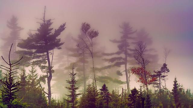 fog-2007-XTi-09-22-043