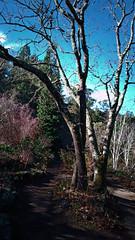 N20171228-0013—Quercus garryana—RPBG—DXO