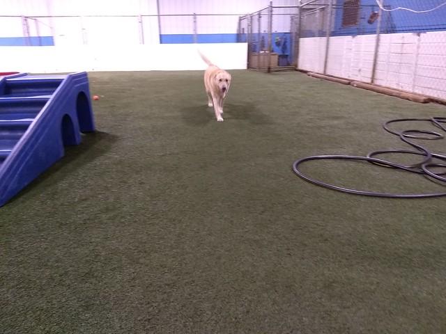 01/28/18 Frisbee Play :D