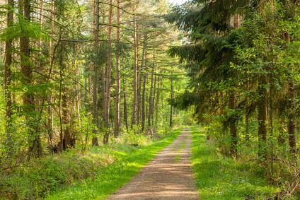 Wald im Frhling