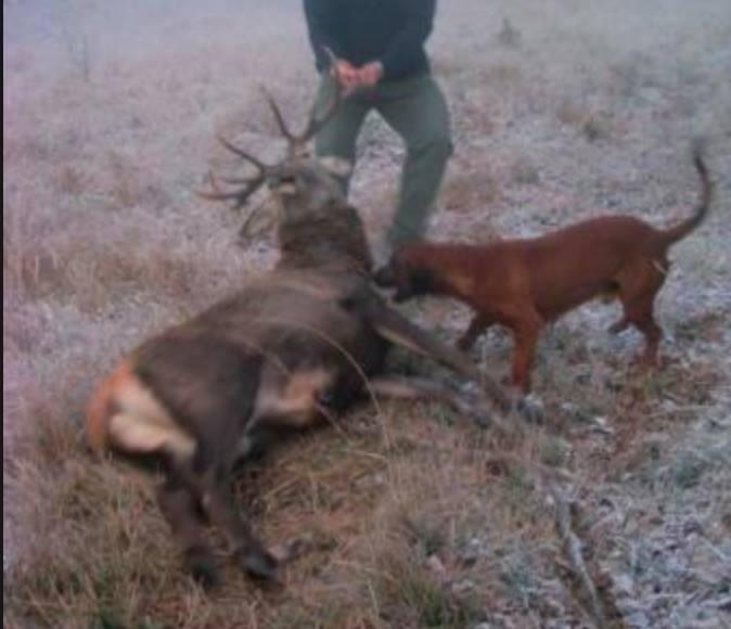 No alla caccia e al bracconaggio
