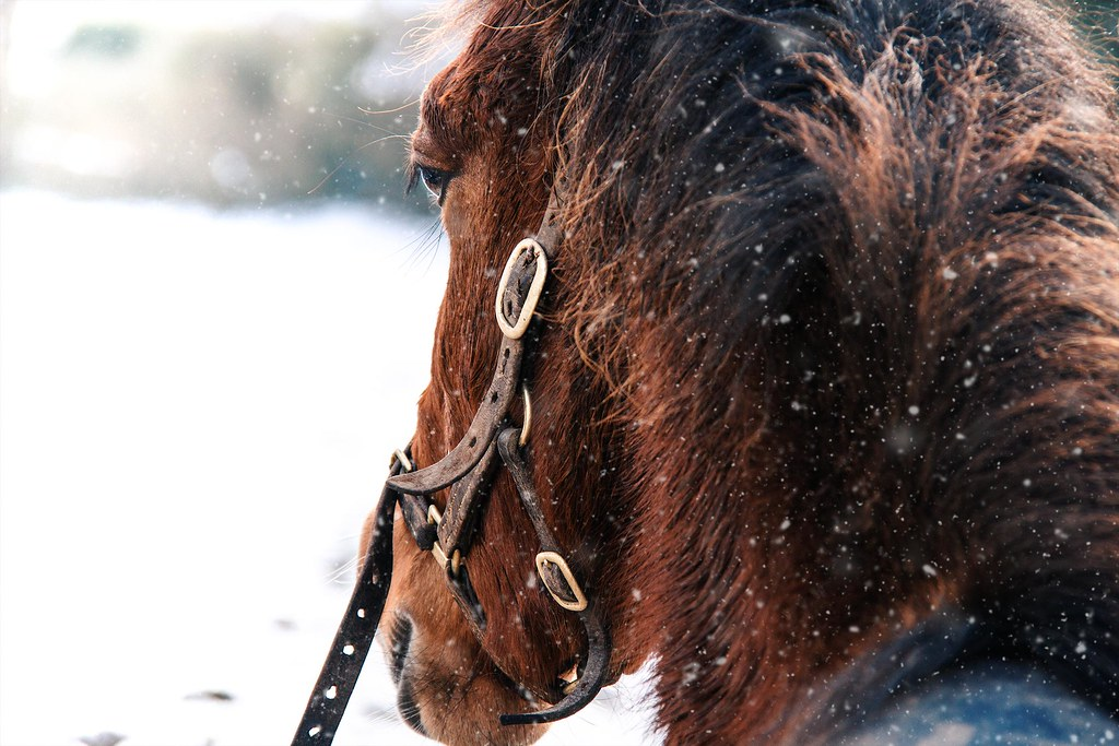 I was warm in my stable.
