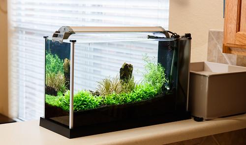 Fluval Spec V Planted Tank