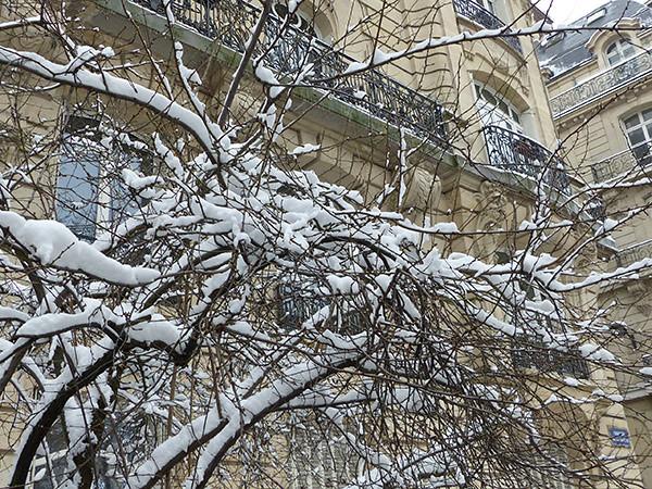 branches devant un immeuble