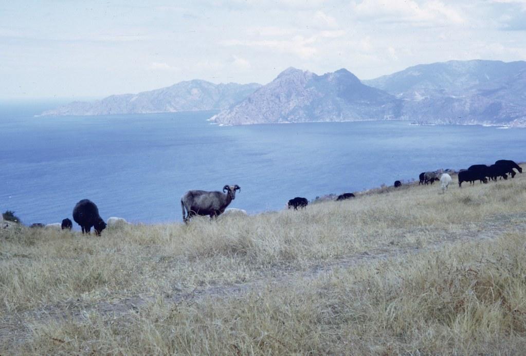 Corse 1972