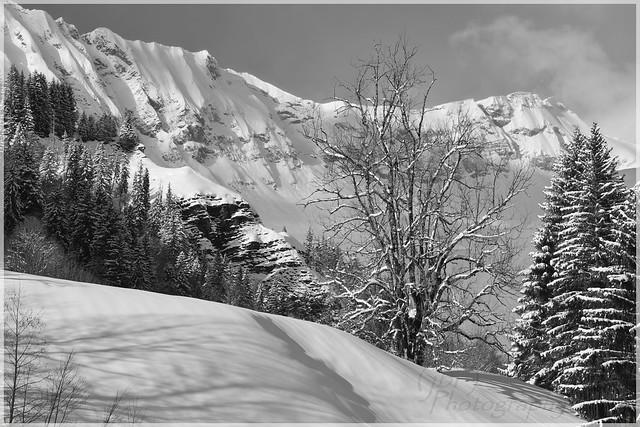 B&W Winter Scenery near