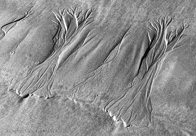 beach trees in the sand