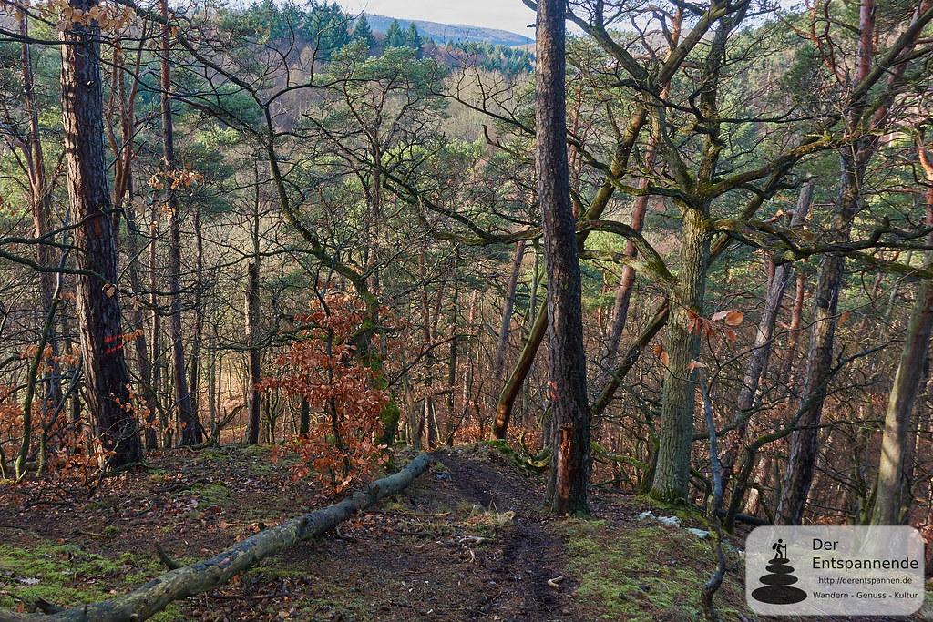 Hinunter zum Gutleutbach - Wandern im Wald bei Kirchheimbolanden