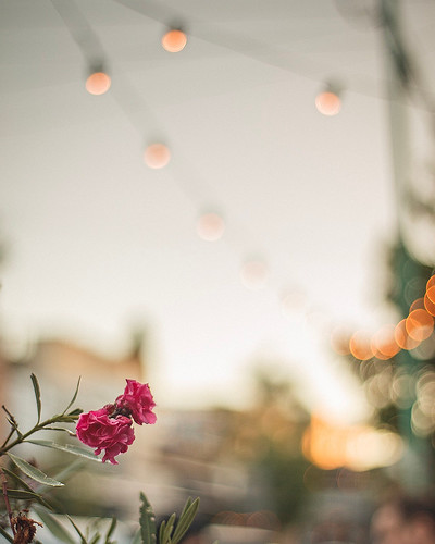 Three little flowers and lots of little lights