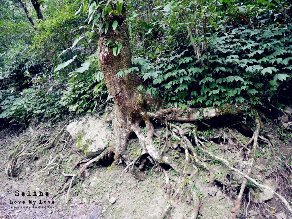 新北三峽一日遊踏青景點推薦滿月圓森林遊樂區 (13)
