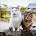 two tongues (Kyoto) by Marser