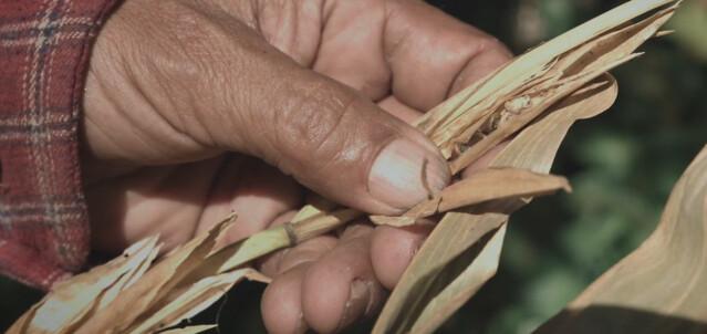 Imagem do documentário Sementes: Bem Comum ou Propriedade Privada?, produzido por coletivos de oito países  - Créditos: Reprodução