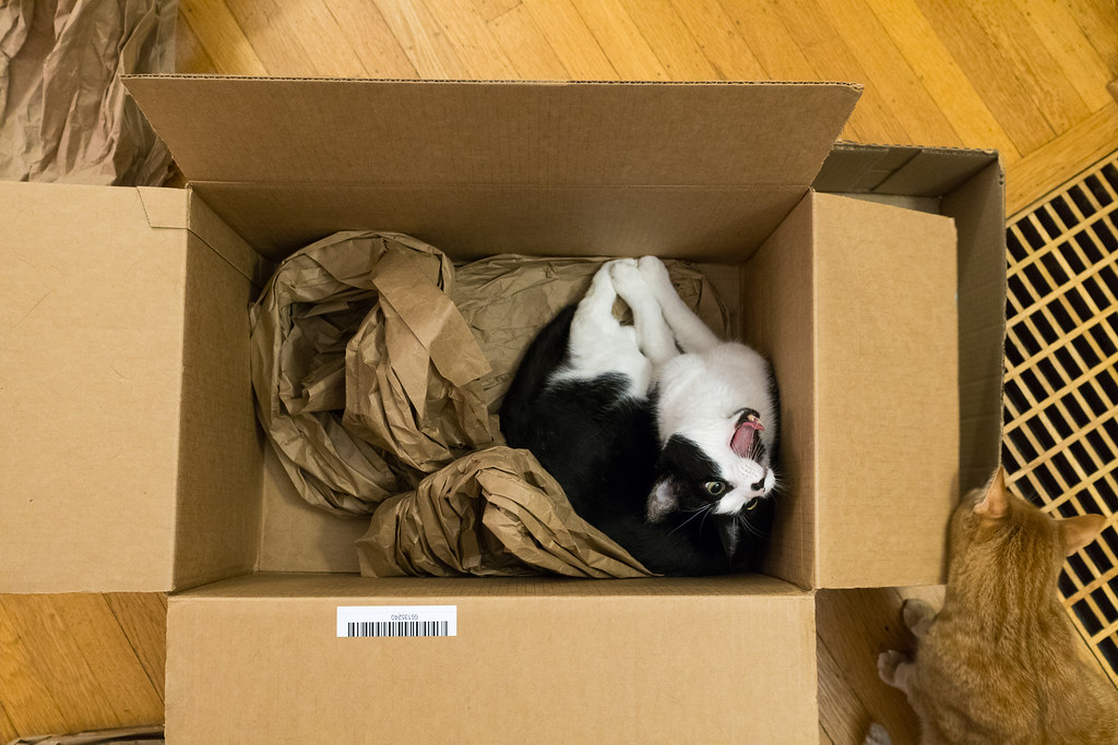 Our cat Boo yawns while sitting in a large box as our cat Sam rubs against it