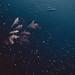 under the surface   l  2018 by weddelbrooklyn
