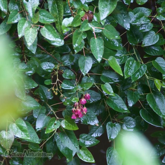 plants 0000 balneario Tambo, Papallacta, Ecuador
