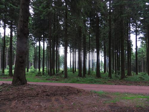 20170605 07 186 Regia Wald Weg