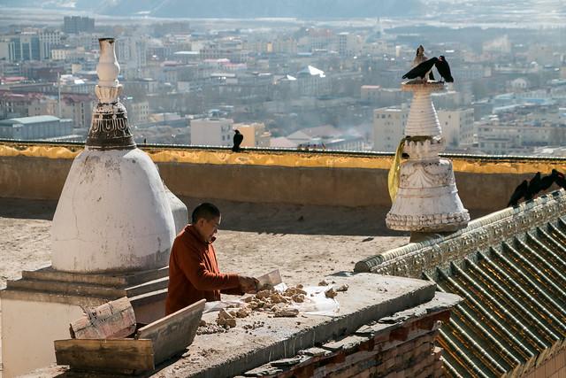 A monk preparing foods for birds, Kandze Monastery, Garzê 鳥たちへのエサを用意するカンゼゴンパの僧