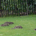 DSC_1509 Mole Holes Dunkeld