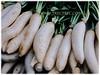 Raphanus sativus (Chinese/Japanese White Radish, Oriental/Cultivated Radish, Giant White Radish, Daikon, Lobak Putih in Malay)