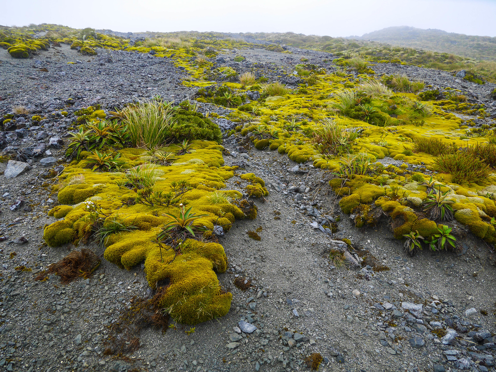 Kepler Track is full of surreal plants