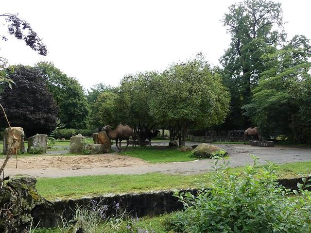 Trampeltieranlage, Zoo Dresden