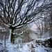 Ravenshore Tree
