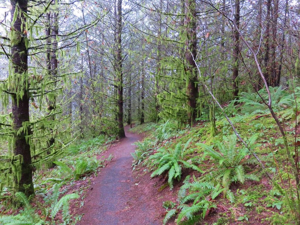 New Growth Trail
