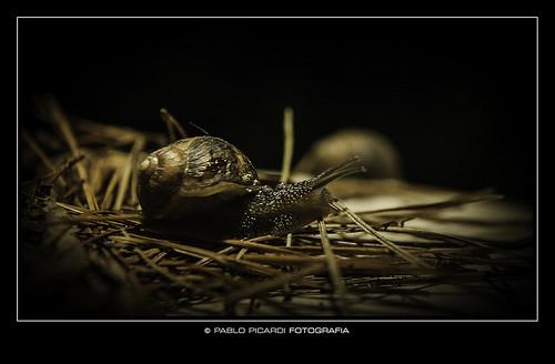 Pablo Picardi 01