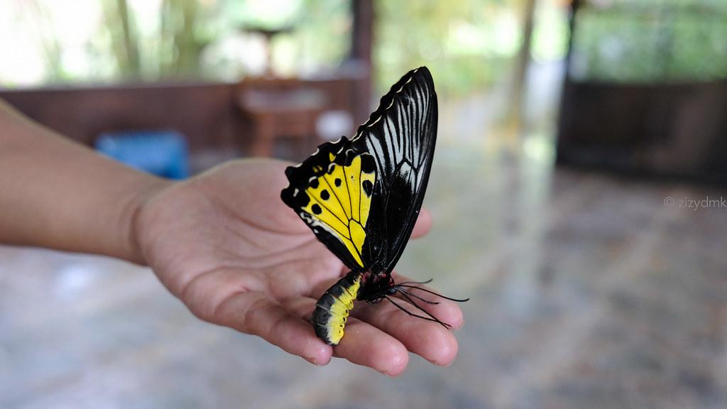 Bali Butterfly Park_0805