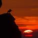 Pelican Sunrise por jimbobphoto