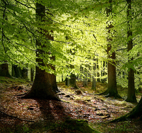 forestmalenethyssen
