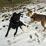 20180216-150859 - Hunde toben im Schnee
