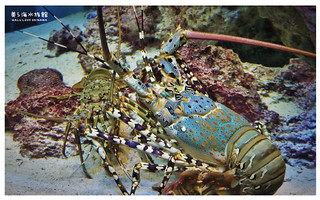沖繩美麗海水族館-16