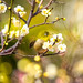 Spring is Arriving by moaan