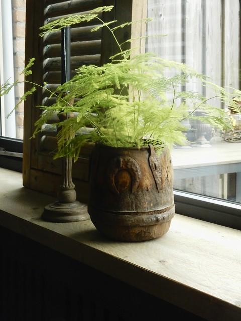 Houten pot asparagus vensterbank