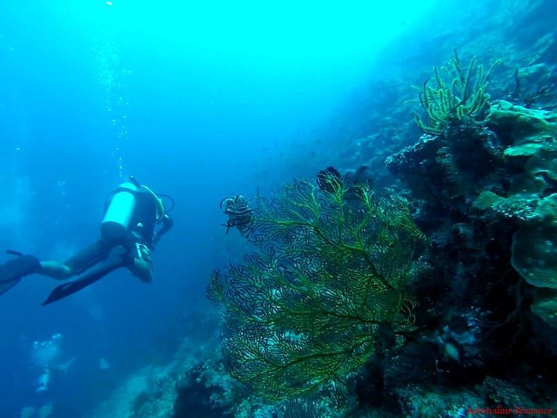 Dive_Against_Debris