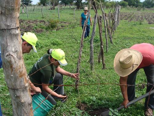 Axochiapan (Quebrantadero), Plantación de cercos vivos