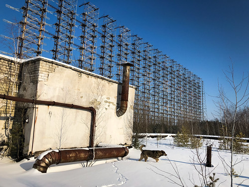 A dog at the Duga radar array in Chernobyl