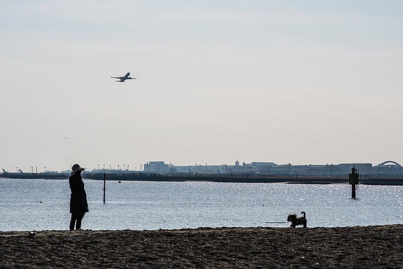 城南島海浜公園の砂浜で犬の散歩