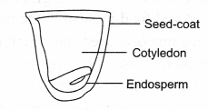 ncert-class-9-science-lab-manual-features-of-monocot-and-dicot-plants-6