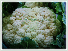 Cauliflower head of Brassica oleracea var. botrytis (Cauliflower, Broccoli, Calabrese, Romanesco) is composed of a white inflorescence meristem, Feb 23 2018