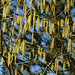 Catkin rainstorm - hazel, Barley Field