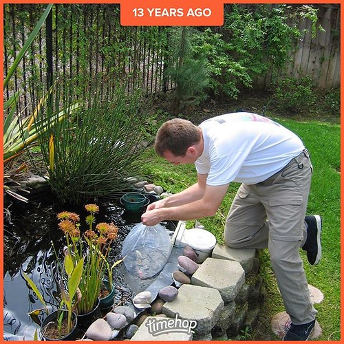 Oh how I do not miss taking care of that pond in the backyard! Years ago we added some more fish to it after killing off most (but not all) of the original fish.
