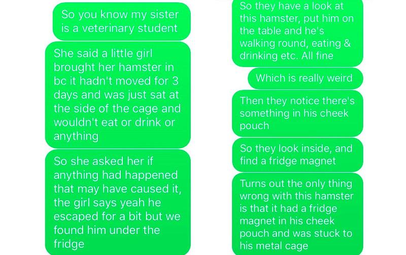 hamster story