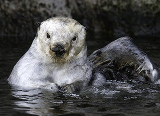 Give it a Scratch