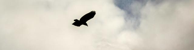 Feb 3 - Blackbird
