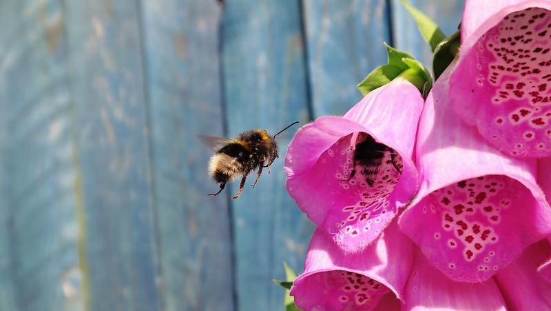 Le robot-fleur attire les abeilles pour polliniser les véritables fleurs