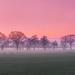 Schaapjes in de opkomende mist bij zonsondergang